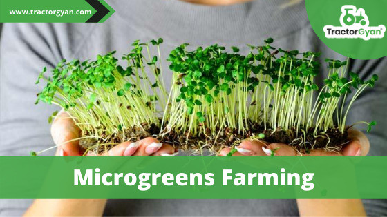 """Microgreens farming: The new farming trend"""