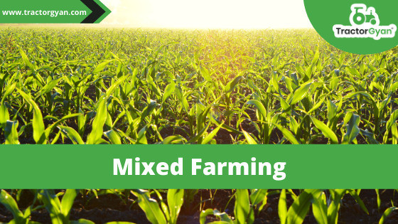 """Mixed farming: Profit-Earning way of farming."""