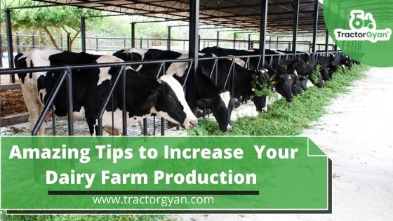 How to Increase Your Dairy Farm Production