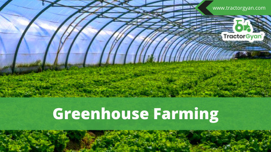 Everything you want to know about Greenhouse Farming