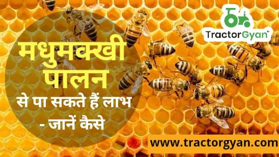 मधुमक्खी पालन यानिकी से पा सकते हैं लाभ - जानें कैसे