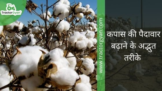 Amazing Tips to Boost Your Cotton Yield