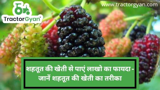 शहतूत की खेती से पाएं लाखो का फायदा - जानें शहतूत की खेती का तरीका