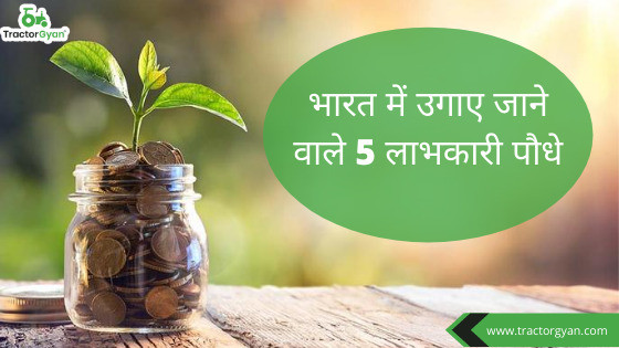"""""""5 shockingly high-profit earning plants grown in India."""""""