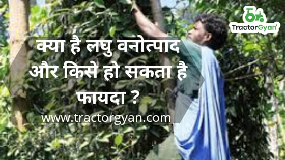 What is minor forest produce? Who can benefit?