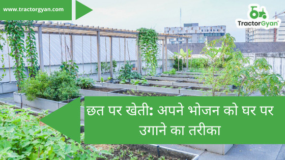 Terrace Farming: A way to grow your own food at home