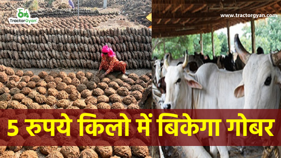 https://images.tractorgyan.com/uploads/1644/60374279e364b_cow-dung.png